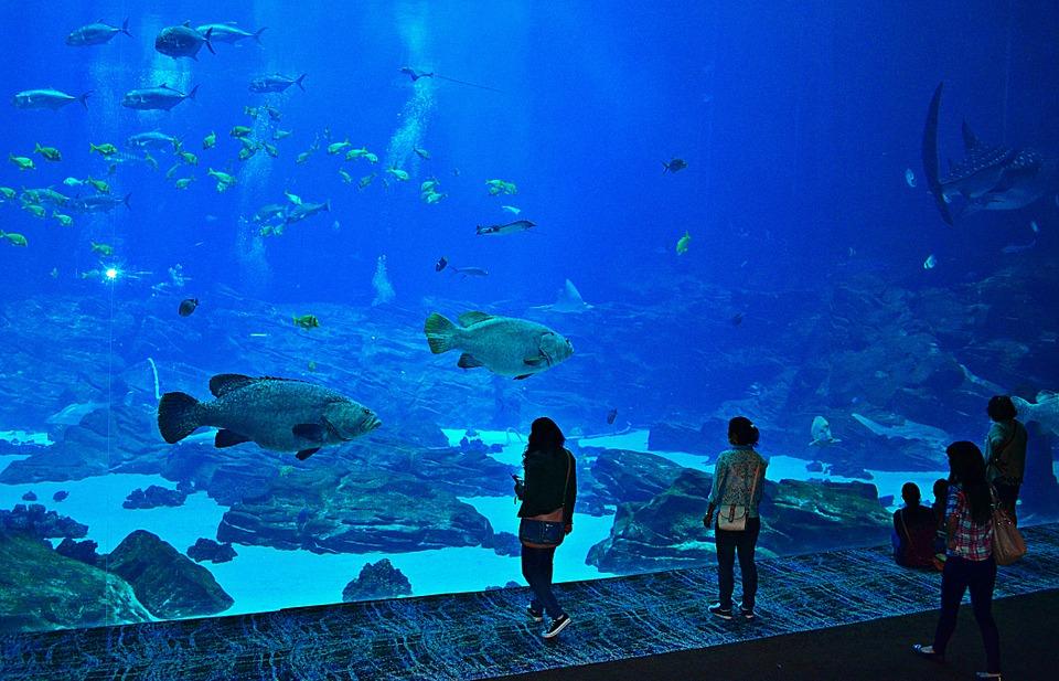 океанариумы мира с фото заказчикам предлагаем посетить